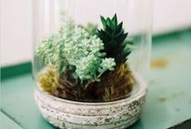 Interior Terrariums / Small Wonders