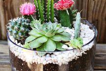 Jardines y plantas / Decoración