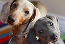 Dogs!!!!!  / by Malika