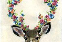 Dear deer deer.