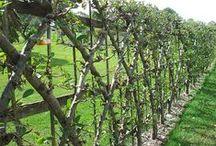 Horticulture & Landscape Design / Teaching Horticulture
