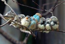 животные, птицы