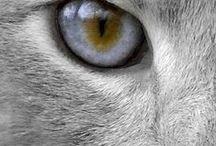 KOČKOVITÉ ŠELMY / Něco málo o kočkovitých šelmách.....