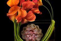 th floristy