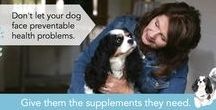 Keep Your Dog Healthy (In spite of dog food recalls, toxic flea products and the rest!) / From powerful dog probiotics to garlic based natural flea control.  Agatha's Apothecary was founded by a dog lover who was determined to not only save the life of her beloved Cavalier Agatha, but who wanted other dog owners to find the products that truly improve pet health, one dog at a time.