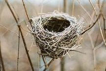 Nest / structures, birds nests, contemporary basketry, weaving... Andy Goldsworthy