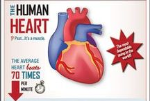 Healthy Heart / Facts, food and recipes for keeping your heart healthy