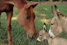 ♪Donkeys & Mules  / by Audrey Merchant