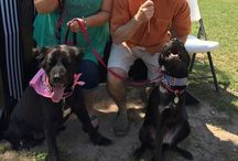 Dog Parks / Fun dog parks to ask your parents to take you in the greater Houston area.