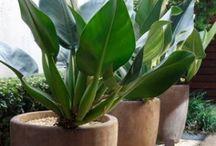 Jardins - Plantas