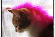 Cookie ! Miss Cat ! / Cookie est chatte europeenne écaille de tortue calico tabby. Elle adore prendre la pose devant mon objectif !