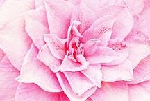 Fleurs  / Photos de fleurs