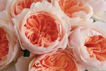 Our Favourite Roses