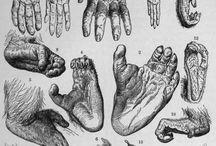 estudios de la mano / hand studies