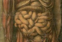 ilustración anatómica / by vhc