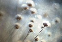 Lensbaby / #Lensbaby photos and tips. Love this! #Inspiration