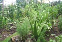 Medicina alternativa / Recetas caseras con plantas medicinales y remedios caseros para tratar diferentes enfermedades.