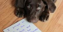 Dog-Shaming / Showcasing the naughtiest dogs on the internet.