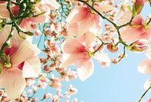Spring is My Favorite.. / my favorite season..