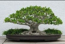 Creative Bonsai's