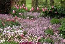 il giardino dei sogni
