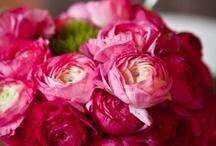 Vaaleanpunaisena kukkivat