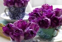 Violettina kukkivat