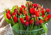 Punaisena kukkivat