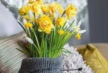 Kevätkukkien juhlaa