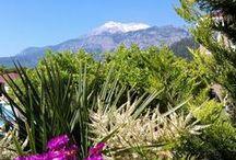 Some Inspiration about Garden Resort Bergamot Hotel
