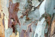 Trees / Type, textures, view