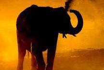malawi/africa / Wild life