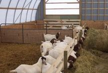 Raising Meat Goats / Raising meat goats for the farm business.