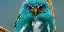 Birds/Птицы