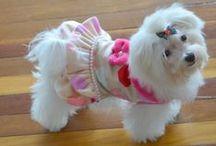 Ropa para perros / Agradecemos a nuestros clientes por estas lindas fotos, de sus mascotas con los productos de ToutMignon.
