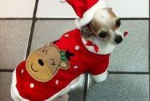 Ropa para perros para dias Festivos / Ropa para mascotas, trajes especiales para las fechas conmemorativas o de celebracio