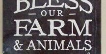 Harlequin Heritage Farms / This board features some of the great photos I've been able take of our animals, our farm, our garden and flowers along with some of the products we have for sale here on the farm.
