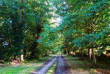 Un hôtel de charme / Venez découvrir le Domaine de Chatenay. Niché dans un parc séculaire de 40 hectares, cette Demeure de charme du XVIII° Siècle qui fleure bon la cire et l'Histoire, a été luxueusement rénovée pour vous.