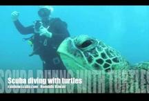 Hawaii scuba diving videos