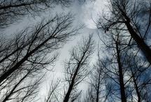 Forest / by Seita Vuorela-Parkkola