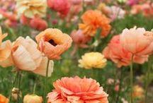 Flowers/Plants / by Grace Baleno