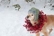 Christmas / by Jamie Sebastian