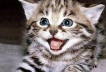 Chats et chatons / Chats et chatons trop mignon