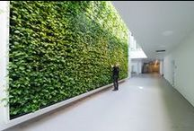 Plantevægge / Plantevægge til kontoret eller..!  En plantevæg kan hænge næste alle steder. #plantevæg