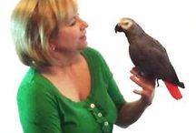 Our Birds  / Meet the BirdSupplies.com flock / by BirdSupplies.com