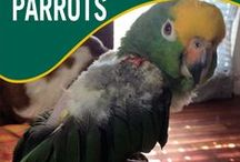Feather Plucking Parrots / Got a feather plucking parrot?  We can help!  We've got #bird collars, #birdVitamins and supplies to prevent and treat feather plucking birds at http://www.birdsupplies.com/feather-plucking-parrots/ / by BirdSupplies.com