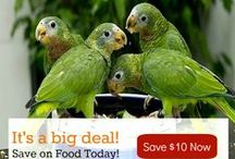 Coupons & Contests / Discover www.BirdSupplies.com latest coupons & contests here!  Save money, win prizes and deck out the bird cage! / by BirdSupplies.com
