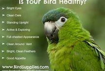 Blog Posts / Learn important bird care tips for a happy parrot.  Subscribe to Blog.BirdSupplies.com to stay up to date on Good for your BIrd Articles! / by BirdSupplies.com