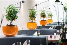 Krukker og Planter / Lidt billeder fra forskellige indretninger...