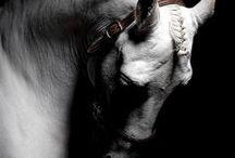 * Animals *